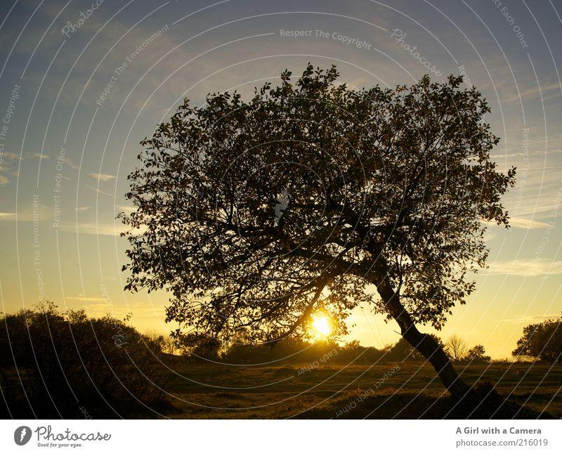 Die Rhön ist schön! Natur Himmel Baum Sonne Pflanze schwarz Herbst Landschaft Umwelt gold natürlich Bayern Baumkrone Sonnenuntergang Abendsonne