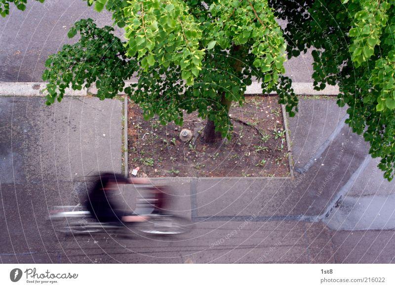 0,32s im Trockenen Fahrradfahren Mensch 1 Stadt Verkehrsmittel Verkehrswege Straßenverkehr Geschwindigkeit Heimweg Baum Bordsteinkante Asphalt Außenaufnahme
