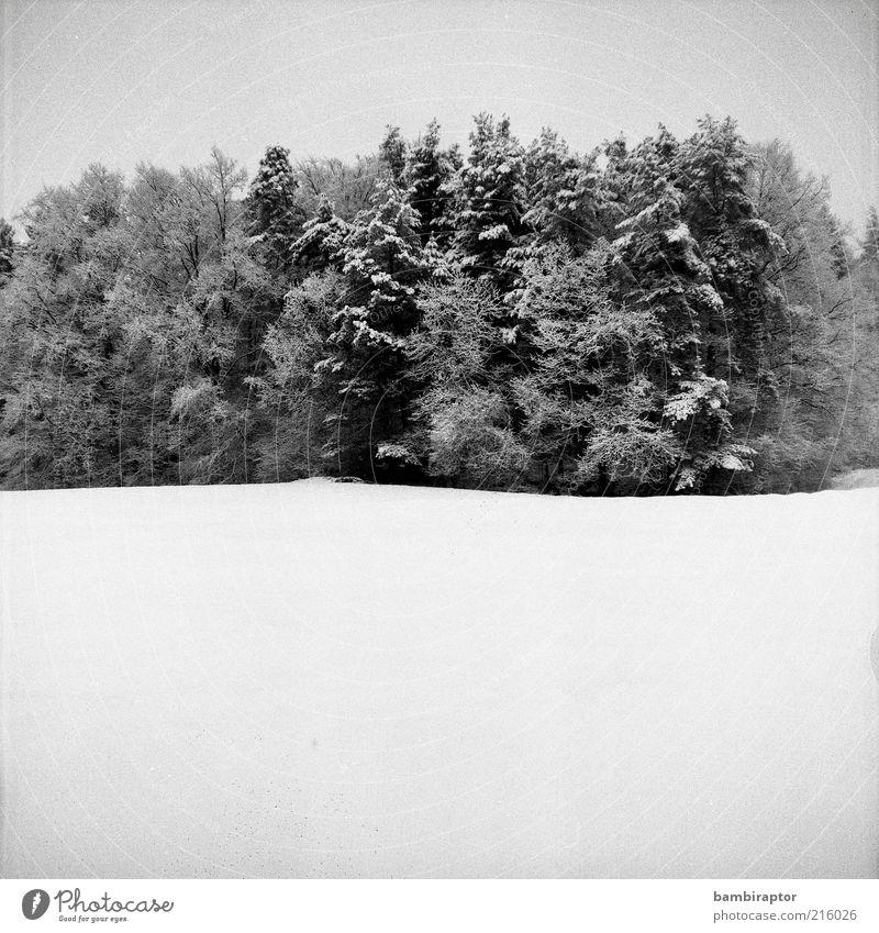 Vorfreude Natur Landschaft Winter Schnee Baum Wald kalt analog Kontrast Schwarzweißfoto Außenaufnahme Textfreiraum unten High Key Waldrand Schneedecke