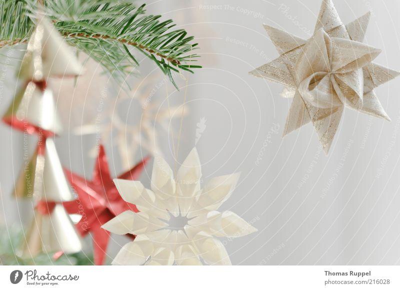 Baumschmuck Dekoration & Verzierung Feste & Feiern Stern (Symbol) Zweig Ast Nadelbaum Tanne Weihnachtsbaum Zeichen Ornament hell Stimmung glänzend glanzvoll