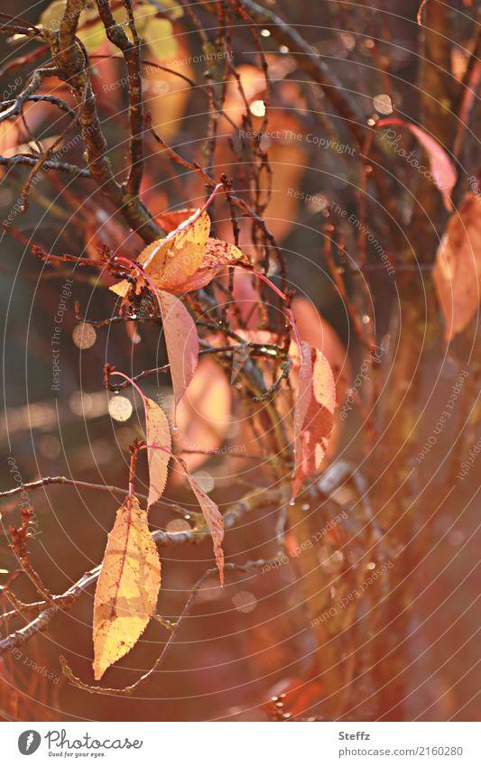 Herbst, wie freue ich mich auf dich.. Natur Pflanze schön Blatt gelb braun Stimmung orange Schönes Wetter Zweig Herbstlaub herbstlich Lichtspiel Lichtpunkt
