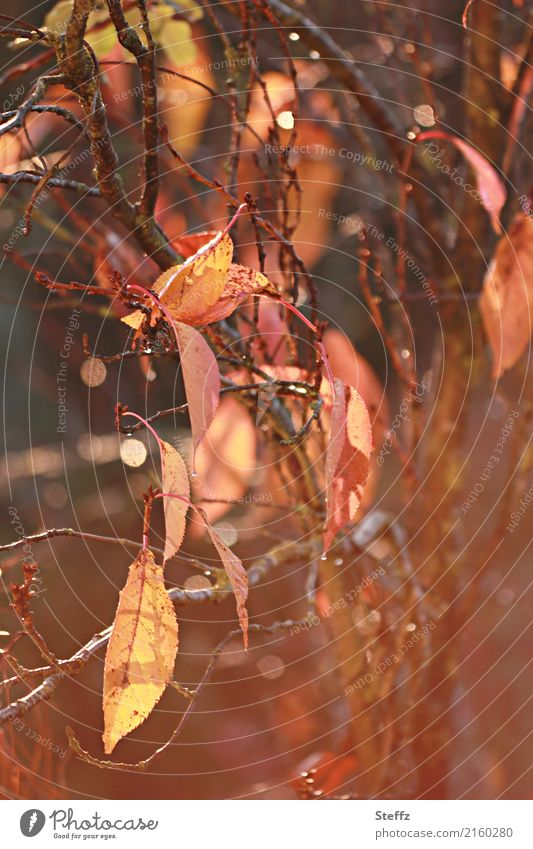Herbst, wie freue ich mich auf dich.. Natur Schönes Wetter Pflanze Blatt Zweig Zweige u. Äste Herbstlaub schön braun gelb orange Stimmung Lichtstimmung