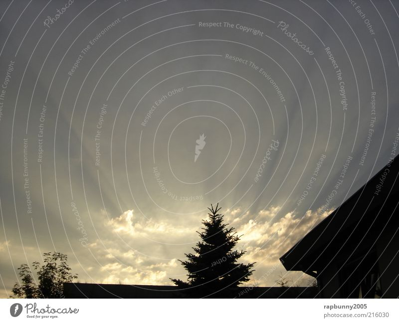 Himmel, Sonne, Sonnenstrahlen Natur Baum Sommer Wolken Landschaft Luft Kraft Wetter Umwelt Hoffnung authentisch natürlich Strahlung