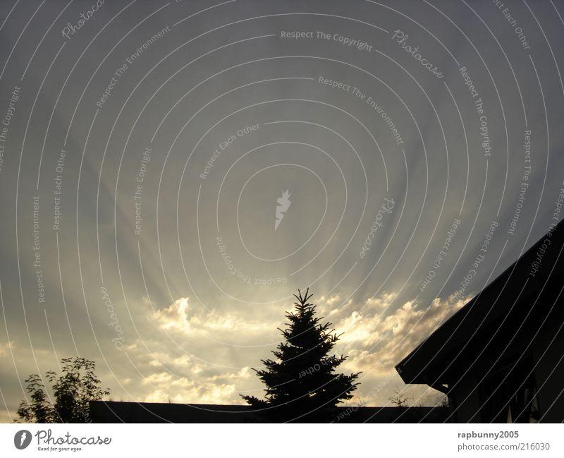 Himmel, Sonne, Sonnenstrahlen Natur Himmel Baum Sonne Sommer Wolken Landschaft Luft Kraft Wetter Umwelt Hoffnung authentisch natürlich Strahlung