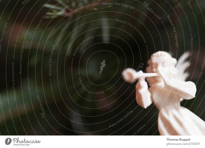 Weihnachtsengel Feste & Feiern Engel hell schön musizieren Farbfoto Innenaufnahme Nahaufnahme Detailaufnahme Menschenleer Textfreiraum links Textfreiraum oben