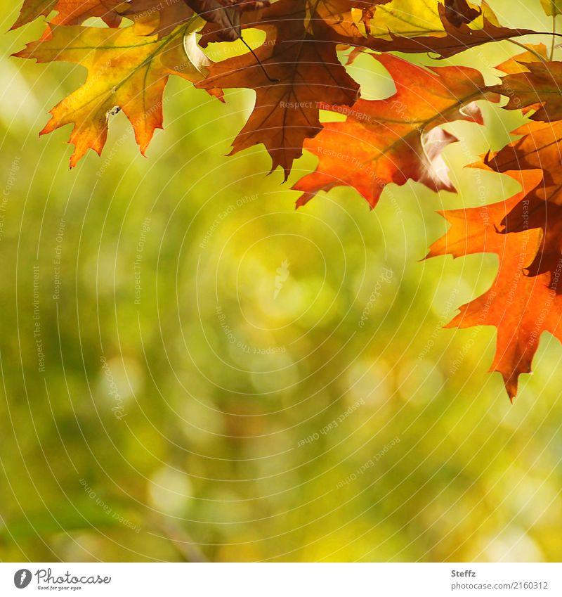 Farbenfroh kommt der Herbst Umwelt Natur Wetter Schönes Wetter Pflanze Blatt Herbstlaub Garten Park Herbstlandschaft schön Wärme braun grün orange Romantik