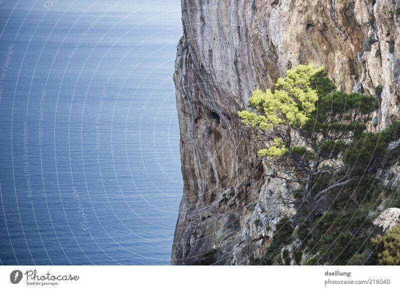 Mallorca IV Wasser blau grün schön Baum Sommer Meer Landschaft grau Stein Küste braun Erde hoch frei Insel