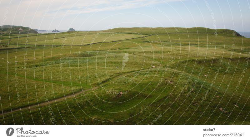 Schottische Küste III Gras Wiese Feld Erholung Unendlichkeit saftig grün Ferne Weide Schottland Wege & Pfade Farbfoto Außenaufnahme Menschenleer
