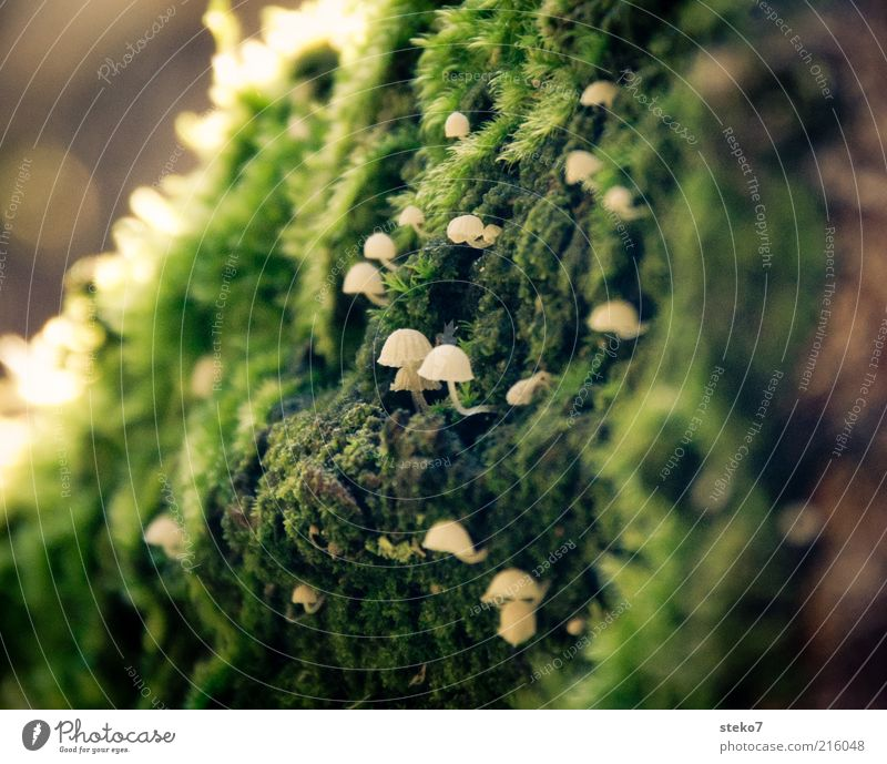 zielstrebig Moos Pilz entdecken Wachstum weiß grün winzig verstecken zerbrechlich aufwärts Nahaufnahme Menschenleer Textfreiraum links Textfreiraum rechts