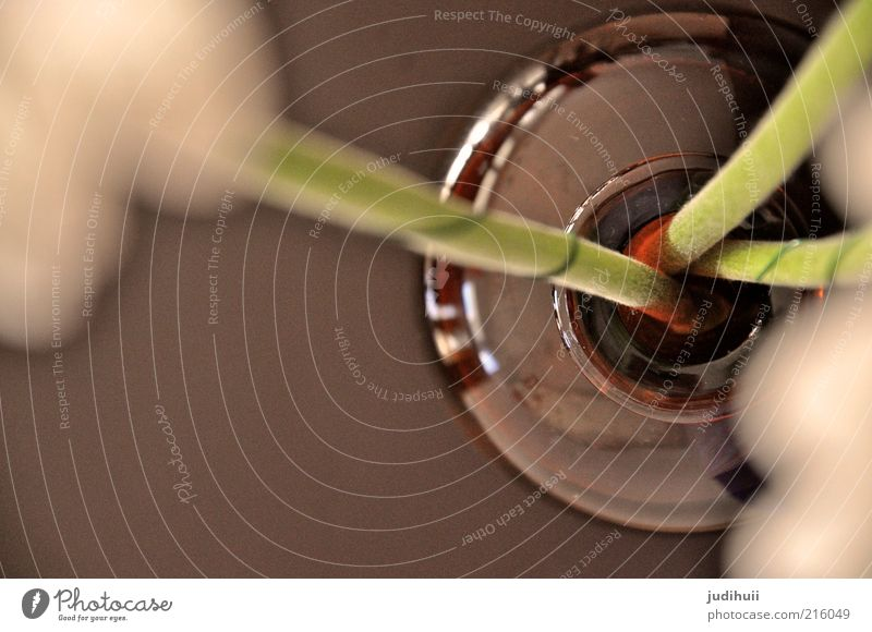 Vasenanblick einrichten Natur Pflanze Blume Dekoration & Verzierung Glas Wasser verblüht lang natürlich braun grün weiß Stengel einstellen Farbfoto
