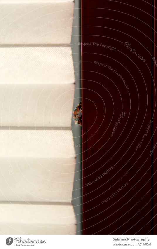 Between. Tier Stil Fenster Kraft elegant Häusliches Leben Mut Respekt Käfer Willensstärke Selbstständigkeit Jalousie Gebäude Rollo ehrgeizig Fensterrahmen