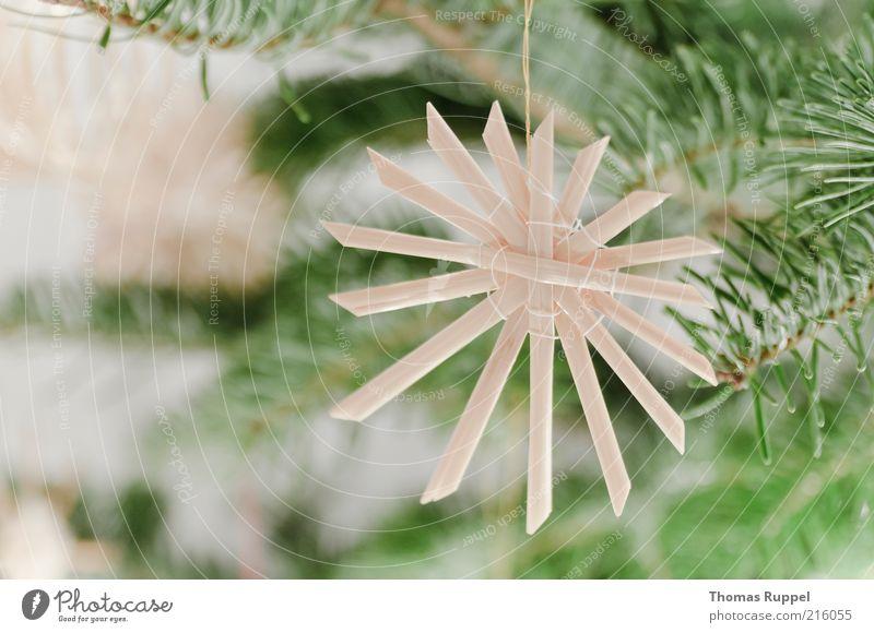 Strohschmuck Weihnachten & Advent Baum grün Pflanze Glück Zufriedenheit Stimmung hell Feste & Feiern Wohnung Fröhlichkeit Weihnachtsbaum Häusliches Leben