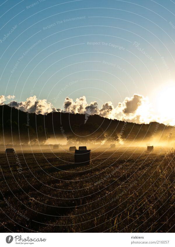 Momente, wie diese... Umwelt Natur Landschaft Erde Sonnenaufgang Sonnenuntergang Sonnenlicht Sommer Herbst Schönes Wetter Nebel Feld Stimmung Lebensfreude ruhig