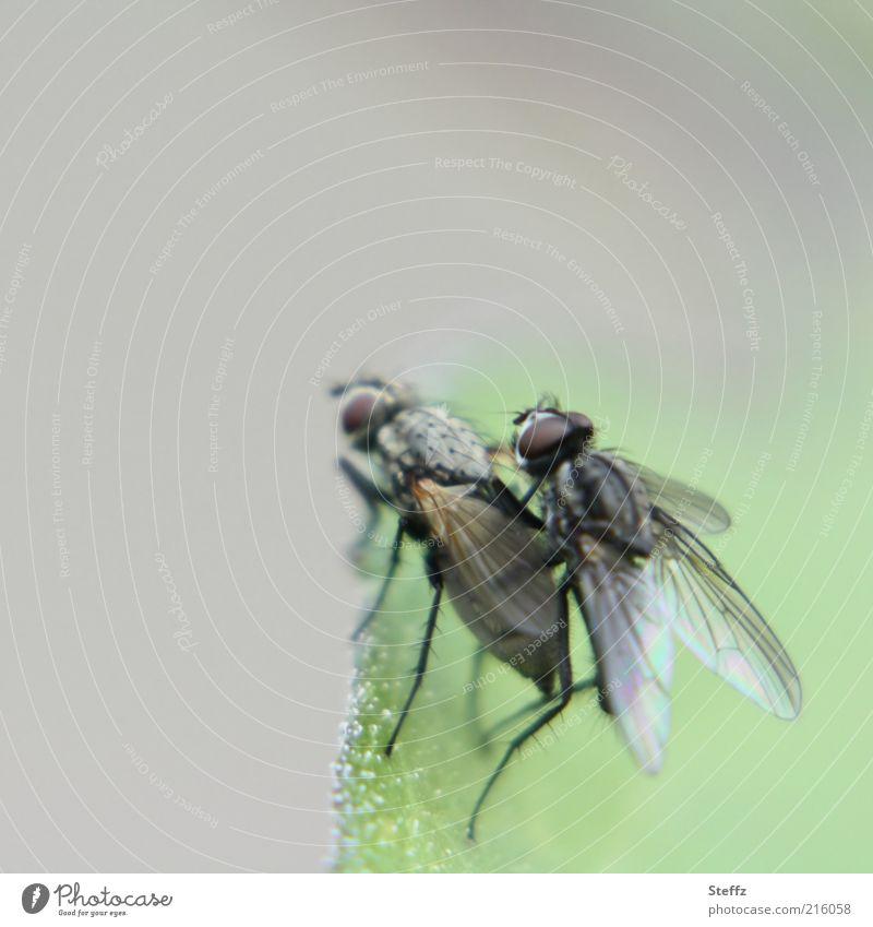 alles Natur! Tier Leben lustig Frühling grau klein natürlich Beine Fliege Tierpaar Flügel Lebensfreude Lebewesen Insekt Zusammenhalt