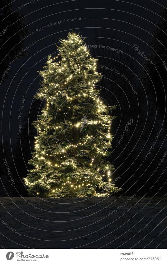 Let it snow Winter Schnee Feste & Feiern Natur Pflanze Nachthimmel Eis Frost Baum Dekoration & Verzierung Kerze Holz Zeichen Weihnachtsbaum Weihnachtsdekoration