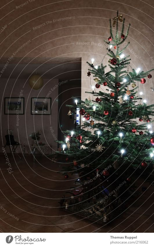Weihnachtsbaum Weihnachten & Advent Baum grün rot Lampe hell Raum Beleuchtung Feste & Feiern Wohnung stehen authentisch Dekoration & Verzierung Häusliches Leben