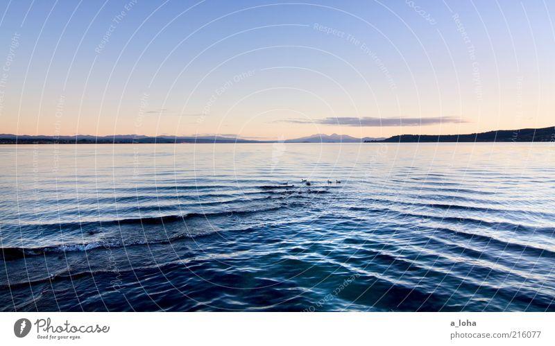 lake taupo Natur Landschaft Wasser Himmel Sonnenaufgang Sonnenuntergang Schönes Wetter Felsen Berge u. Gebirge Küste Seeufer Ente Tiergruppe dunkel kalt nass