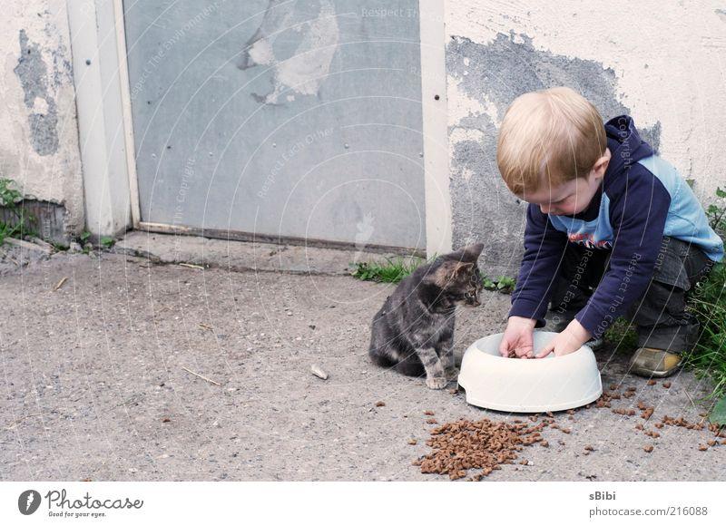 Liebe auf den 1.Blick Teil 2 oder wer wem das Essen stahl... Kind Mensch Tier Wand Spielen Junge Mauer Stimmung Katze Freundschaft Zufriedenheit Tierjunges Kindheit Zusammensein blond Tür