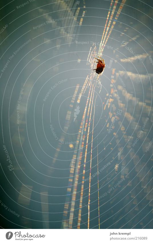 netzwerken Tier warten bedrohlich Jagd Ekel bauen anstrengen Spinne Netz fleißig Spinnennetz