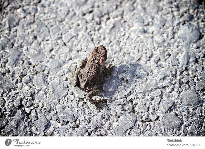 Quack Straße Stein warten klein Umwelt authentisch Boden Asphalt vorwärts Licht bräunlich
