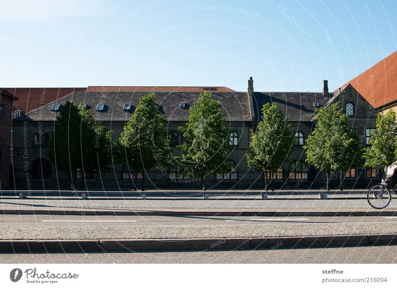 Ins Wochenende radeln. Baum ruhig Haus Straße Gebäude Fassade Verkehr Idylle Fahrradfahren Schönes Wetter Dach Altstadt Skandinavien Blauer Himmel