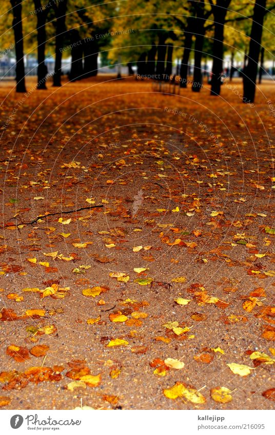 bring mich nach hause Natur Baum Pflanze Ferien & Urlaub & Reisen Blatt Ferne Herbst Umwelt Park Freizeit & Hobby Erde Ausflug Tourismus Sightseeing Allee Herbstlaub