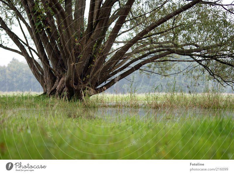Regenzeit Umwelt Natur Landschaft Pflanze Urelemente Erde Wasser Baum Gras Park Wiese hell kalt nass natürlich grau grün Überschwemmung überschwemmt trist