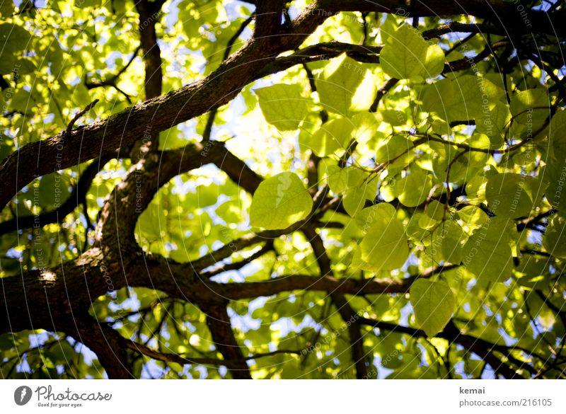 Schöne Blätter Natur grün schön Baum Pflanze Sommer Blatt Umwelt hell Klima Wachstum Ast leuchten Blühend Schönes Wetter Zweig
