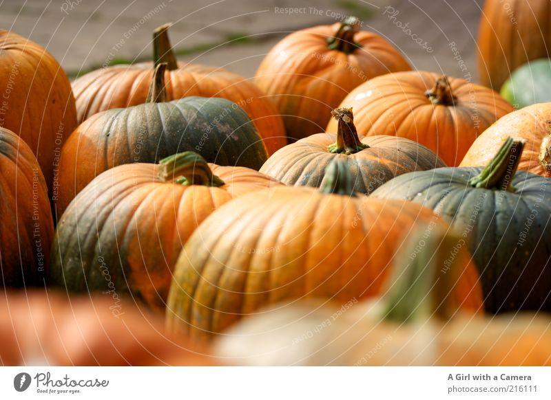 Gruselgemüsefraktion Lebensmittel Gemüse Ernährung Bioprodukte Vegetarische Ernährung Kürbis Kürbiszeit Kürbisgewächse Natur Herbst dick authentisch