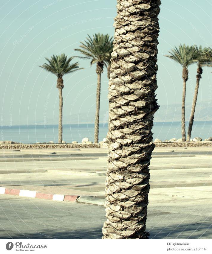 Ja ich weiß, schiefer Horizont! Freizeit & Hobby Ferien & Urlaub & Reisen Tourismus Ausflug Sommer Sommerurlaub Umwelt Natur Baum Seeufer Meer Tatkraft Palme