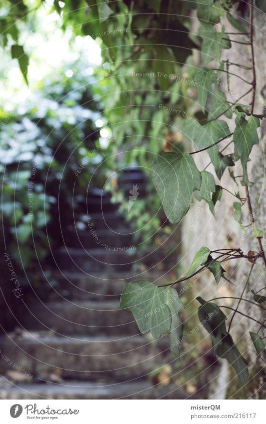 Secret Garden. Natur alt Pflanze dunkel Garten Mauer Kunst Umwelt Treppe ästhetisch Wachstum geheimnisvoll historisch Ruine exotisch aufsteigen