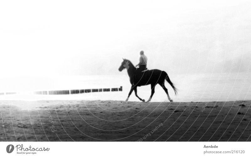 Seepferdchen... Wasser weiß Strand Tier schwarz Einsamkeit Landschaft Sport grau Sand Küste Stimmung laufen ästhetisch Pferd Sehnsucht