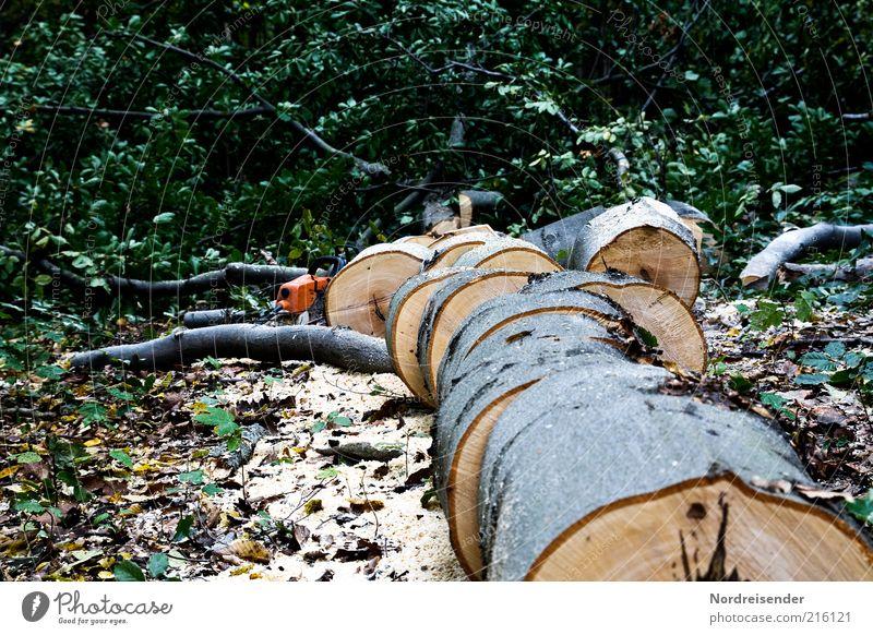 Holz vor der Hütte Natur Baum Wald Arbeit & Erwerbstätigkeit Umwelt authentisch Teile u. Stücke Baumstamm Klimawandel Forstwirtschaft gefallen zerkleinern