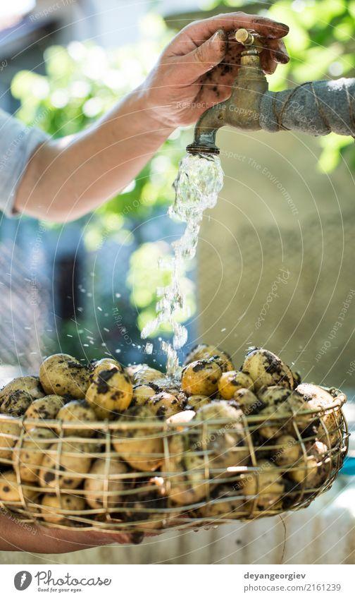 Frisch geerntete Kartoffeln waschen Gemüse Schalen & Schüsseln Frau Erwachsene Hand Pflanze frisch natürlich Sauberkeit grün Wäsche waschen Bauernhof Ackerbau