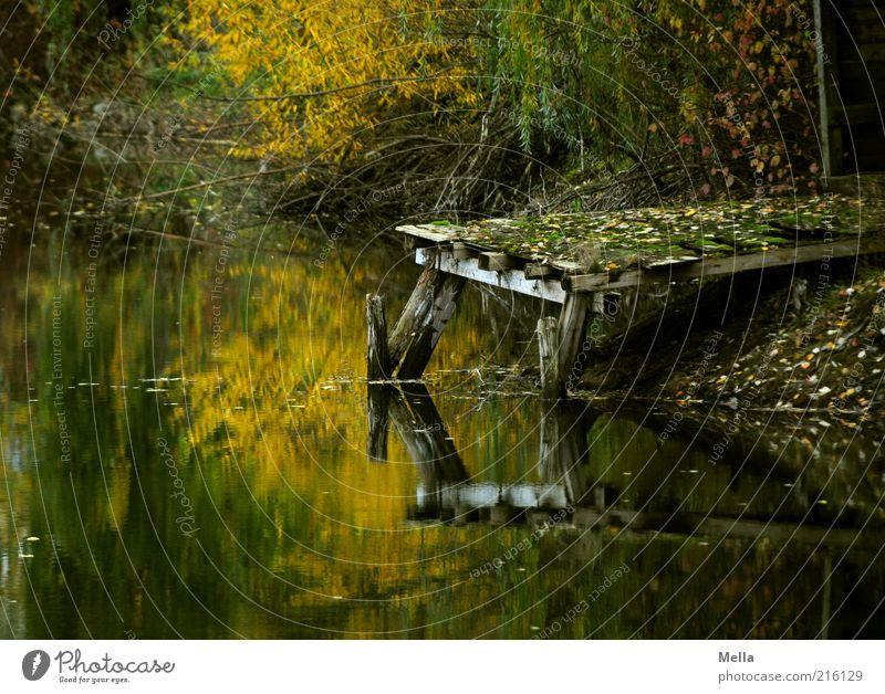 Was vom Tage übrig bleibt Natur Wasser alt ruhig Einsamkeit dunkel Herbst Holz See Landschaft Stimmung braun Umwelt Zeit kaputt Ende