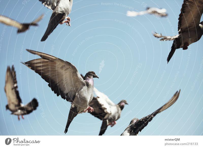 Away. ästhetisch Vogel Vogelschwarm Vogeljagd Taube fliegen Luft viele Schwarm Freiheit Feder Himmel taubenblau Flügel leicht Gurren Farbfoto Gedeckte Farben