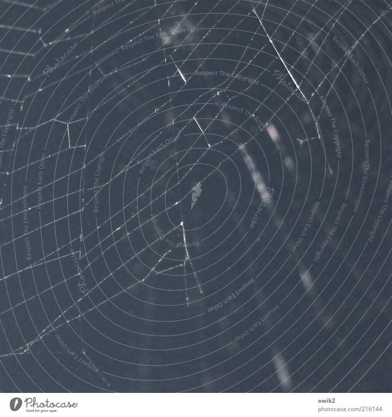 Netzwerk leuchten dünn eckig einfach elegant nah natürlich blau weiß Leichtigkeit Zusammenhalt glänzend Spinnennetz Fäden parallel leicht Farbfoto