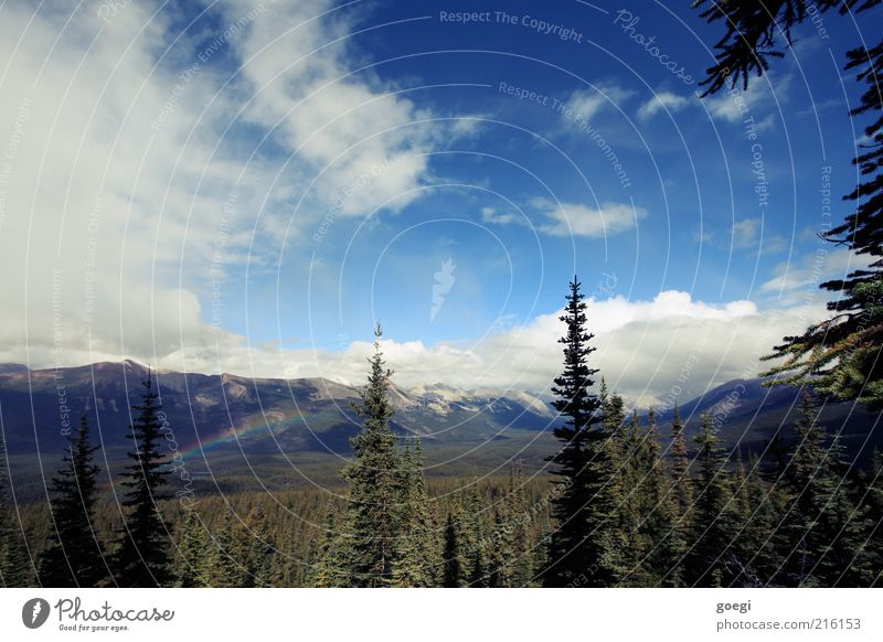 Wetterumschwung Himmel Natur Baum Pflanze Sommer Wolken Einsamkeit Ferne Wald Berge u. Gebirge Landschaft Umwelt Regen ästhetisch Idylle