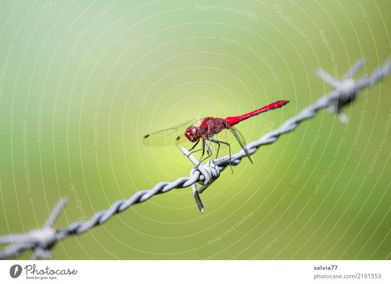 stachelig grün rot Tier Metall elegant Aussicht Perspektive Flügel beobachten planen Schutz Pause Sicherheit Insekt Wachsamkeit Leichtigkeit