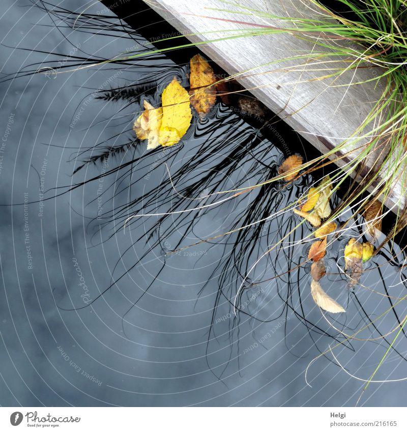 am Rande... Natur Wasser schön alt Himmel grün blau Pflanze ruhig Blatt Wolken Einsamkeit gelb Herbst Gras Holz