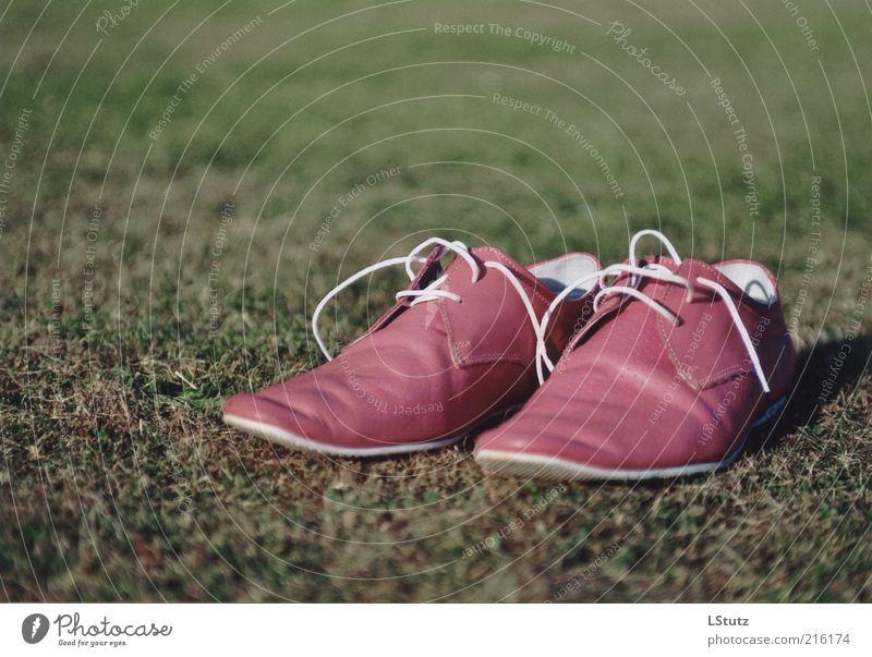 extravagant - analog Stil Mode außergewöhnlich rosa Schuhe einzigartig Rasen trendy trashig Leder Objektfotografie Damenschuhe Schuhbänder Produktfotografie
