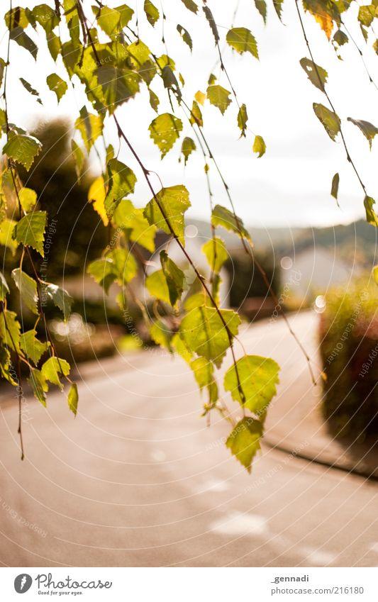 Hier gehts lang Natur Himmel Baum Pflanze Blatt Straße Herbst Wege & Pfade Umwelt Verkehr Klima entdecken Schönes Wetter Personenverkehr verdeckt Fahrbahn