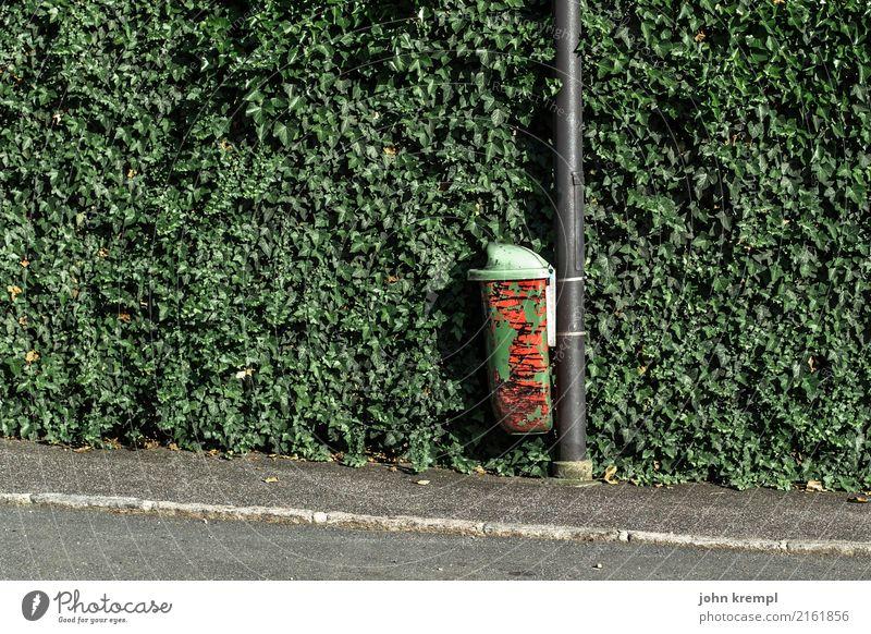 Rein mit dem Krempl Grünpflanze Hecke Verkehrswege Fußgänger Straße Bürgersteig gehsteigkante Müllbehälter Laternenpfahl Asphalt stehen Stadt grün rot