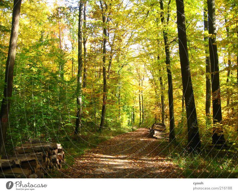 Herbstwald :) Natur schön Baum grün Pflanze ruhig gelb Wald Freiheit Holz Wege & Pfade Zufriedenheit braun wandern