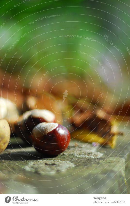 Hummelrund braun grün Kastanie Herbst herbstlich Blatt Stein Lust Natur Farbfoto Außenaufnahme Schwache Tiefenschärfe Kastanienblatt Beton Menschenleer
