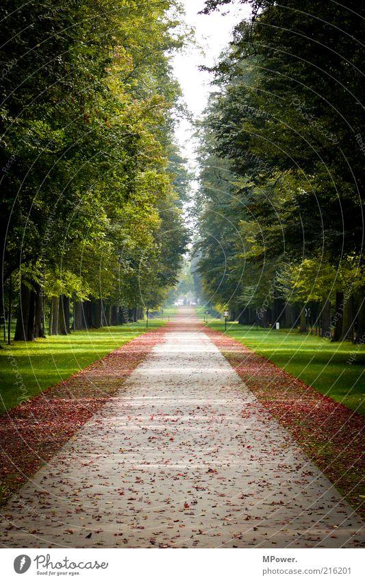Herbst Ausflug Gras Park Wiese gelb grün Allee Baum Blatt Aussicht tief Symmetrie Farbfoto Außenaufnahme Menschenleer Tag Schatten Kontrast Starke Tiefenschärfe