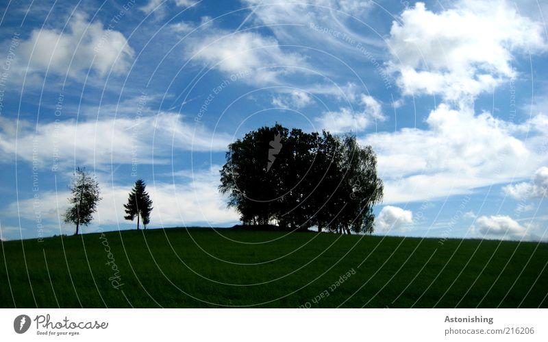 die 2 Ausgestoßenen Himmel Natur blau grün Baum Pflanze Sommer Blatt Wolken schwarz Umwelt Landschaft Wiese Gras Horizont Feld