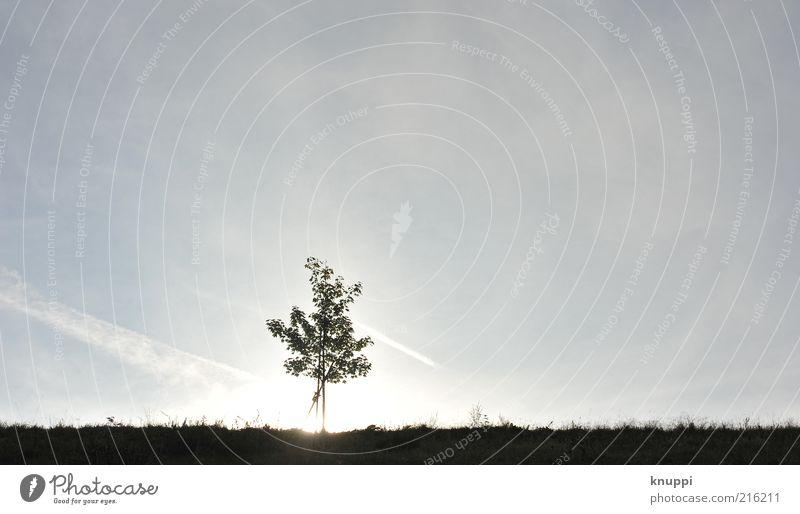 _I__ harmonisch Erholung ruhig Umwelt Natur Landschaft Himmel Wolkenloser Himmel Horizont Sonne Sonnenaufgang Sonnenuntergang Sonnenlicht Schönes Wetter Baum