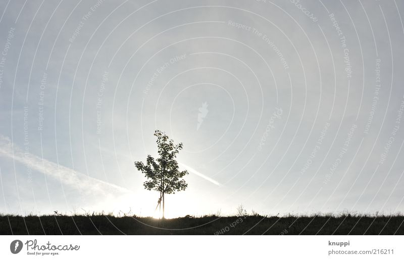 _I__ Himmel Natur blau Baum Sonne ruhig Einsamkeit Erholung Wiese Landschaft Umwelt Gras Feld Horizont Schönes Wetter harmonisch