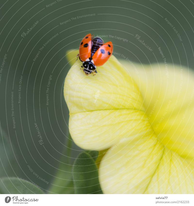 fliegt er oder nicht? Natur Pflanze grün Blume rot Tier gelb Blüte Glück Garten fliegen Lebensfreude einzigartig Blühend Flügel niedlich